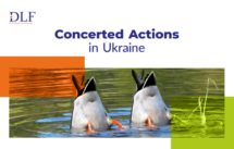 Concerted Actions in Ukraine -- DLF lawyers Ukraine -- brochure cover -- ducks diving